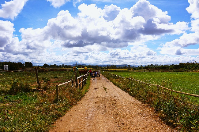 Sa Mandra Azienda Agrituristica - Image 8