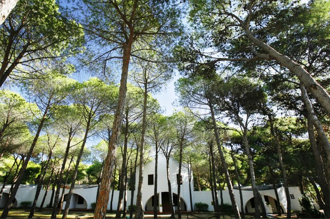 Hotel Mare Pineta - Imagen 13
