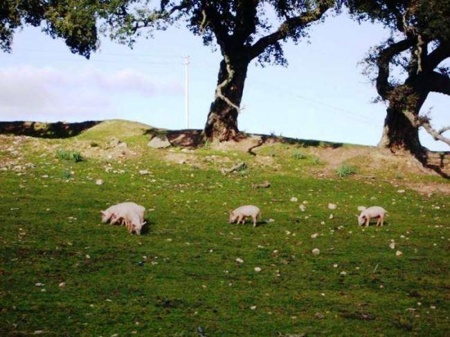 Bauernhof Il Muto di Gallura - Bild 34