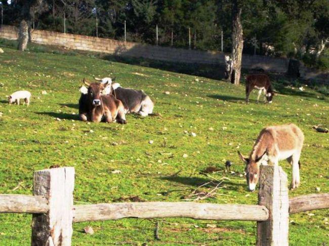 Bauernhof Il Muto di Gallura - Bild 36